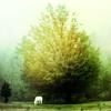 apagon: (serenity)