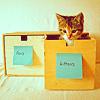 rinja: kittens (in the drawer next to the socks)