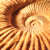 revolutions: Close-up of an ammonite. (ammonite)