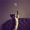 revolutions: A cat jumps to catch a paper star. (catch a falling star)