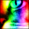 curiosity: Close up of the right half of a cat's face with vertical stripes of colors going across in rainbow order. (Picto: Rainbow Paradacsa)
