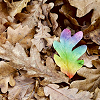 scarletsorcerer: Multi-coloured leaf. (leaf)