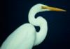 decemberthirty: (egret)
