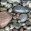 kiwisue: (Stones)