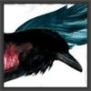 ravencycle_kink: raven (raven 1)
