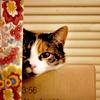 samjohnsson: I am stealthy! (Random Cat Camo)