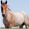 bashfulshifter: ((horse) I'm also a horse!)