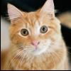 bashfulshifter: ((cat) attentive)