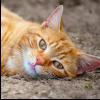 bashfulshifter: ((cat) doing cat stuff)