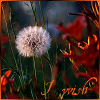 havocthecat: dandelion seeds and wishes (feelings dandelion wish)