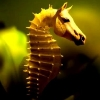 lanalucy: (seahorse)