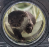 mistressjinx: otter looking glass (otter looking glass)