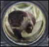 mistressjinx: otter looking glass (otter looking glass)