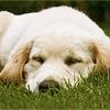 soyalex: (puppy) (Default)