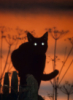 thatsmycat: (Default)
