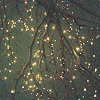 outlineofash: Lights wrapped around the branches of a tree. (Gentle - Glittery Light)