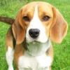 kittie8571: lucky puppy (pic#861804)