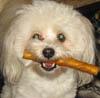 sugar_cookie: (Nacho with Bone)
