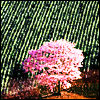 ext_11596: (misc - pink tree)