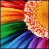 locketofyourhair: (Flower)