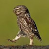 marcicat: thanks, laura! (owl strut)