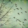 frailspells: (flight)