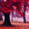 scifisentai: tree with red leaves (red tree)