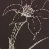 moonsongs: (dark flower)