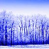havocthecat: icy winter trees (seasons winter trees)