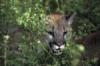 sablin27: (cougar)