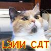 skull_bearer: (Lenin cat)