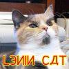 skull_bearer: (Lenin cat)
