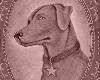 nightdog_barks: (Star Dog)
