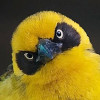 ronija: (птиц)