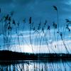 subjunctive: (blue reeds)