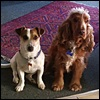 claidheamhmor: The dogs, Gus and Wallace (Dogs)