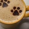 annieke: coffeepaws (coffeepaws)