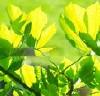 pjthompson: summer (sunlight)