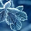 winterlover: frosty leaves (winter icon 05)
