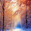 sholio: sun on winter trees (Teyla Ronon happy)