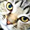 tarlanx: (GEN - Cat)