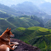 sasha_feather: dog looking over a valley (dog and landscape)