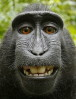 pjthompson: (macaque_full)