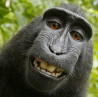 pjthompson: (macaque_tilt)