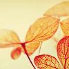 isabelquinn: (Stock - leaves)