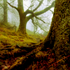 inevitableentresol: tree in forest (tree in forest)