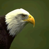 boris_eagle: (Eagle)