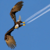 boris_eagle: (Flight of the Eagle)