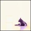 x_catseye: (Cat in the sun)