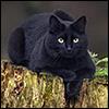 ostro_goth: (z Cats - Myrrh in the woods)